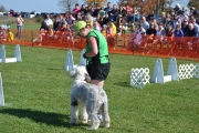 Flyball demo at the Norwood Fair